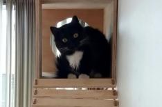 gato03