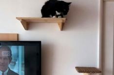 gato06