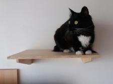 gato02